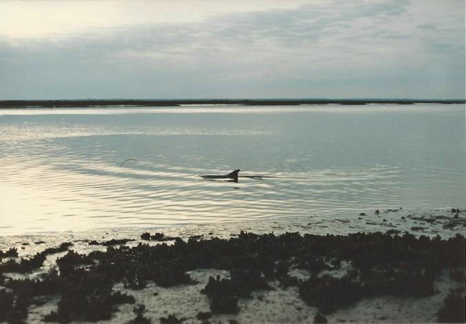 Bye bye dolphin!