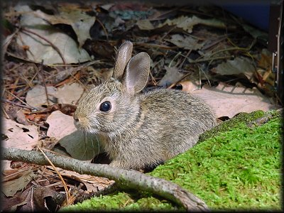 bunny1naturehaven
